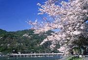春の嵐山渡月橋