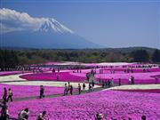 富士芝桜祭りイメージ