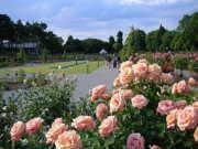 敷島公園ばら園まつり(イメージ)