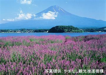 ★富士山麓初夏の河口湖畔一大イベント《河口湖ハーブフェスティバル》
