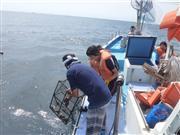 ★三浦半島で『タコ網漁体験』