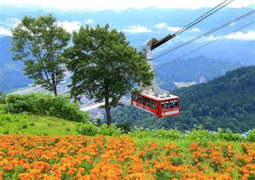 ロープウェイで雲の上の花畑へ 湯沢高原 お花めぐり【通常座席プラン】【四季の旅】