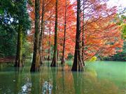 篠栗九大の森 ※イメージ