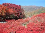 河口湖紅葉祭り ※イメージです。