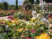 一万坪の広大な敷地に約200種類ものハーブたちが咲き誇ります。