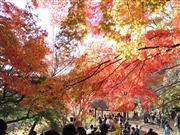 高尾山紅葉 ※イメージです。