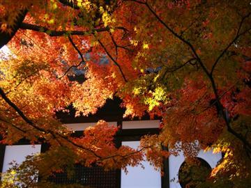【大阪府内各地より出発】東福寺・高台寺と町屋スタイルのラグジュアリーホテルで京を感じる和のタパスランチ<添乗員同行>