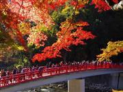 香嵐渓 ※イメージです。