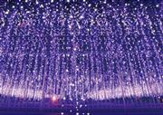 """★関東最大級!関東3大イルミネーションあしかがフラワーパーク""""光の花の庭""""を鑑賞♪"""