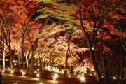 虹の郷ライトアップ(イメージ)