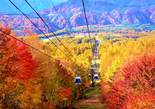 ★標高1,600mの山頂へ、国内屈指の紅葉パノラマを満喫!ハンターマウンテン塩原