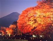 河口湖紅葉まつり ライトアップ
