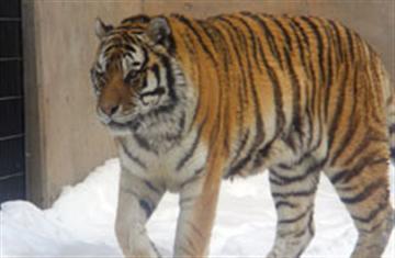 ≪札幌発≫滞在時間約3時間入園券付・冬の旭山動物園を満喫 1名様より出発