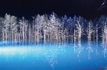 ≪札幌発≫冬の旭山動物園とライトアップ青い池&白ひげの滝欲張りプラン 1名様より出発
