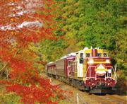 紅葉のわたらせ渓谷鐵道トロッコ列車   ※イメージ