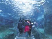 旭山動物園 ※画像提供:旭川市観光課