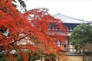 東大寺 ※イメージ