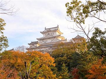 ひとめ二万本「綾部山梅林」・国宝姫路城と室津カキ料理
