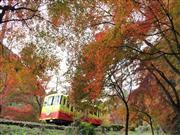 紅葉の高尾山ケーブルカー ※イメージ