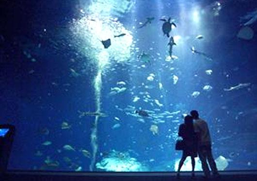 ◆アクアワールド茨城県大洗水族館