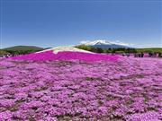 富士芝桜 ※イメージ
