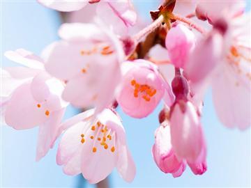 【千葉県内発着】桜といちごの美食サプラ伊豆!!<添乗員同行>