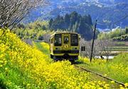 いすみ鉄道(3月中旬~4月中旬頃・イメージ)