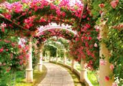 ハイジの村・バラの回廊(6月頃)