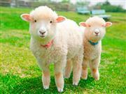 ☆かわいい動物が待っています♪マザー牧場