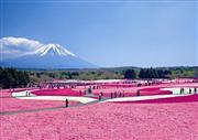 ★首都圏最大級!約80万株の芝桜♪富士芝桜まつり★
