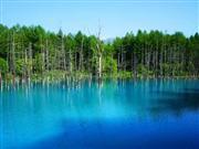 美瑛の青い池 ※イメージ