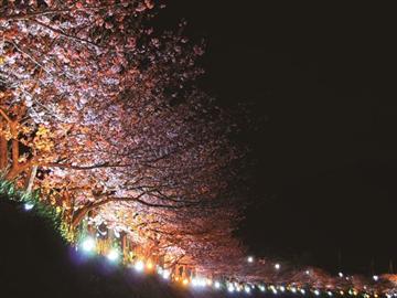 【東葛エリア発着】春のよみうりお花見号<添乗員同行>