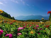 富士見高原 提供:富士見高原花の里 ※イメージ