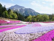 秩父羊山公園の芝桜 ※イメージ  画像提供:秩父市観光課