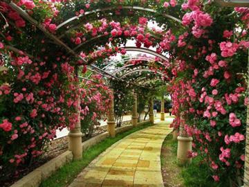【熊谷市周辺発】ハイジの村250m日本一のバラ回廊と桔梗屋信玄餅詰め放題!