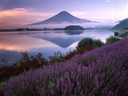 河口湖ハーブフェスティバル ※イメージ 画像提供:富士河口湖町観光課