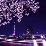 夜桜クルーズイメージ