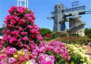 熊本農業公園カントリーパーク「春のバラ祭り」 ※イメージ