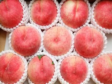 【埼玉県内発着】高級品種白桃ドドンと2箱付!甲州白桃狩り食べ放題<添乗員同行>