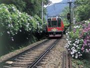あじさい列車※イメージ 画像提供:箱根登山鉄道
