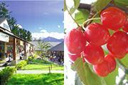 八ヶ岳リゾートアウトレット&サクランボ狩りイメージ