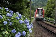 箱根登山鉄道 あじさい列車  ※イメージ