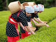 ◆茶畑でコスプレ体験
