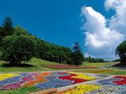 お花畑イメージ