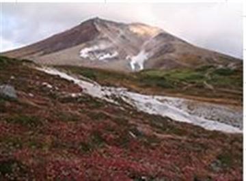 大自然が広がる「大雪山国立公園」&北海道最高峰の旭岳散策と青い池・ファーム富田・美瑛の丘めぐりバスツアー