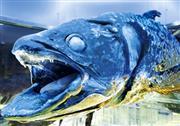 冷凍シーラカンス 提供:沼津港深海水族館