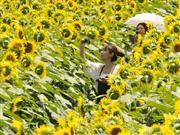 夏の花!ひまわりに会いにゆきます!