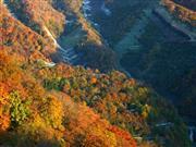 いろは坂※イメージ 画像提供:日光観光協会