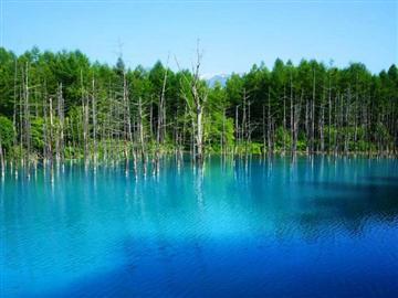 【富良野・美瑛物語】秋景色の青い池・ファーム富田・四季彩の丘コースバスツアー