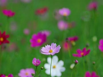 【京都発着】5つ星の宿 長島温泉ホテル花水木優雅な昼食と季節の花々咲き誇るなばなの里<添乗員同行>